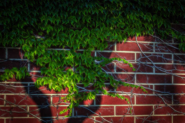Photograph - Shadow On The Wall by Tim Bryan