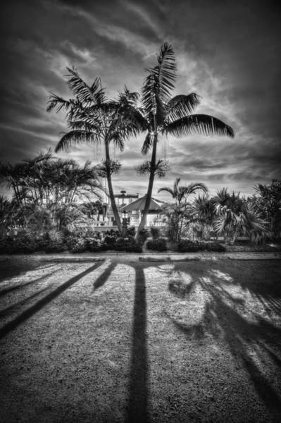 South Florida Wall Art - Photograph - Shadow Waltz by Evelina Kremsdorf