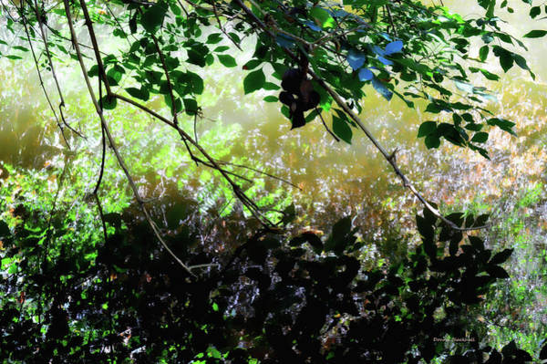 Wall Art - Photograph - Shadowed Reflections by Donna Blackhall