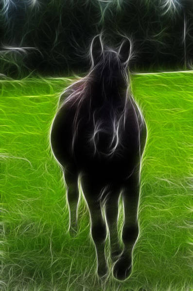 Photograph - Shadowfax Lord Of All Horses by Lawrence Christopher