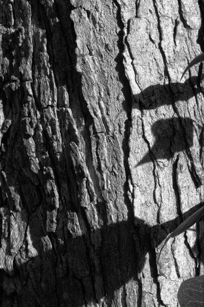 Wall Art - Photograph - Shadows And Bark by Richard Rizzo