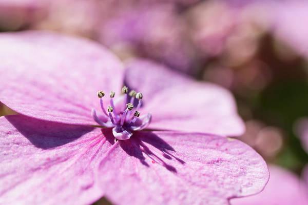 Photograph - Shadows In Pink by Raelene Goddard