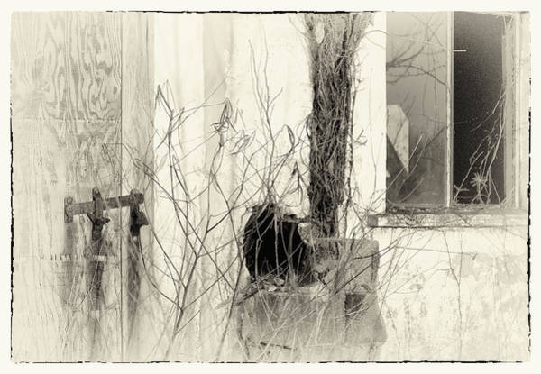 Photograph - Shadows Of Time by Susan Maxwell Schmidt