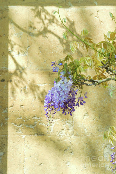 Wall Art - Photograph - Shadows Of Wisteria by Tim Gainey