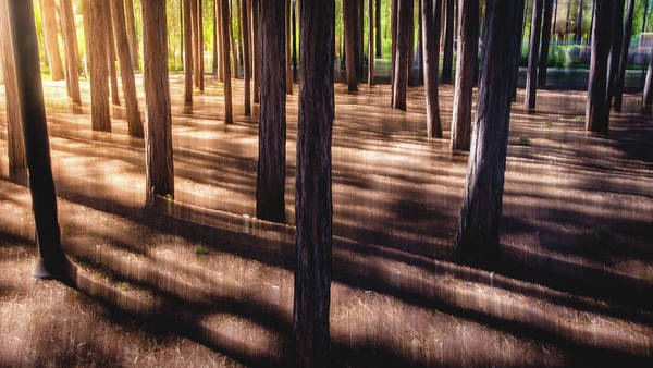 Photograph - Shadows by Okan YILMAZ