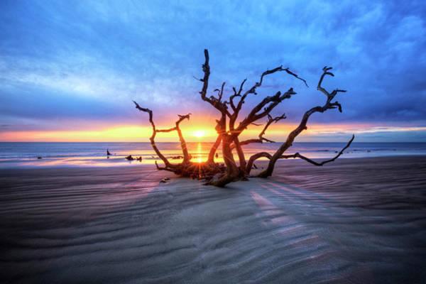 Wall Art - Photograph - Shadows On Driftwood Beach by Debra and Dave Vanderlaan