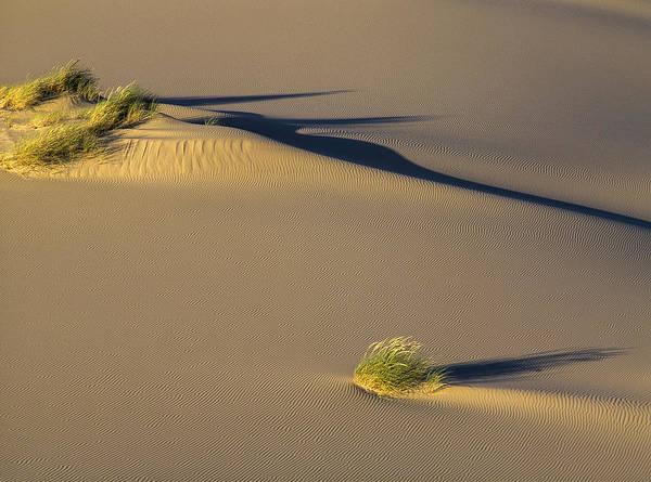 Photograph - Shadows On The Sand by Robert Potts