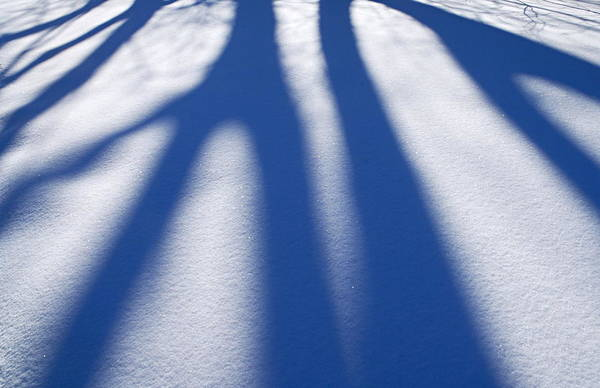 Photograph - Shadows On The Snow by Larry Ricker
