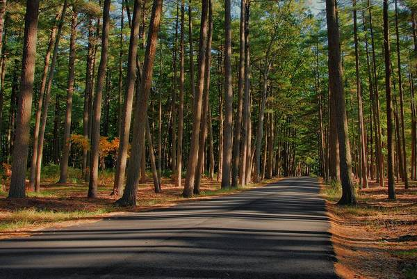 Photograph - Shadows Road - Ocean County Park by Angie Tirado