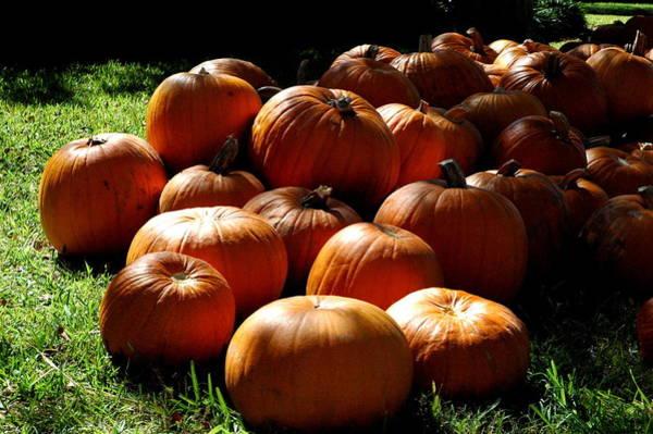 Photograph - Shadowy Pumpkins by Teresa Blanton