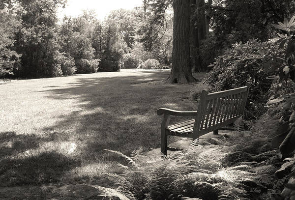 Longwood Gardens Photograph - Shady Bench by Gordon Beck