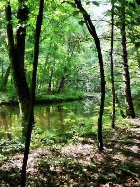 Photograph - Shady Woods by Susan Savad