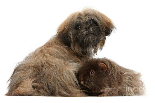 Photograph - Shaggy And Mutley by Warren Photographic