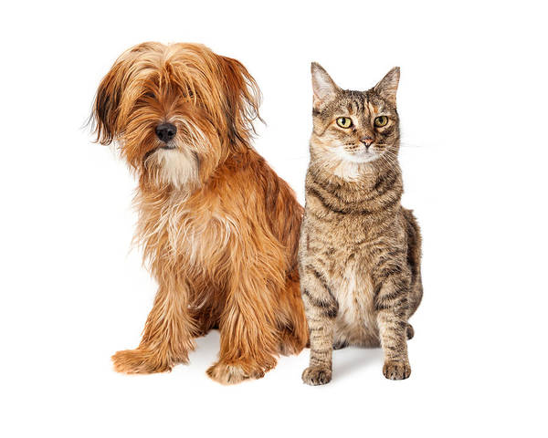 Crossbreed Wall Art - Photograph - Shaggy Dog And Tabby Cat Sitting Together by Susan Schmitz