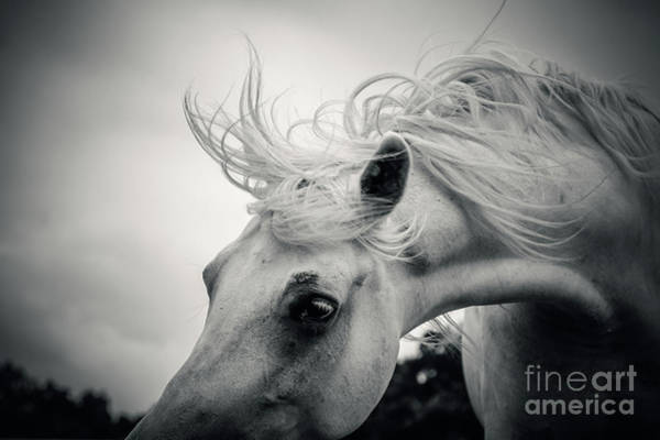 Photograph - Shaggy Morning Horse by Dimitar Hristov