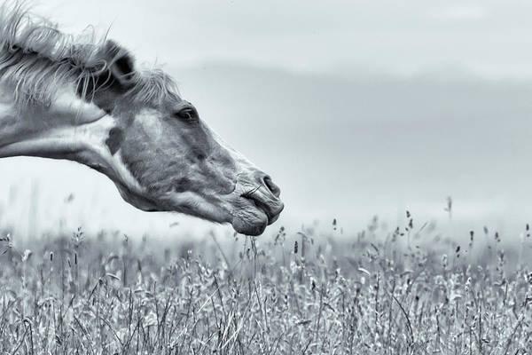 Photograph - Shake It Off Selenium by Belinda Greb