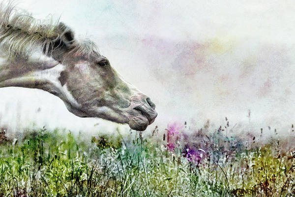 Wall Art - Photograph - Shake It Off Special Textured by Belinda Greb