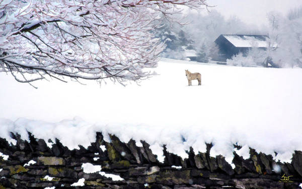Photograph - Shaker Horse In Winter by Sam Davis Johnson