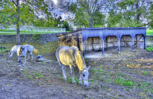 Photograph - Shaker Horses 3 by Sam Davis Johnson