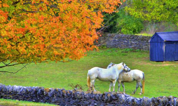 Photograph - Shaker Horses And Stone Fences by Sam Davis Johnson