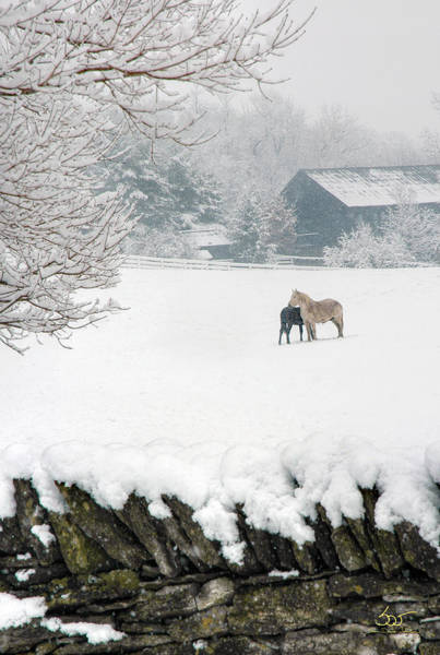 Photograph - Shaker Horses In Winter 2 by Sam Davis Johnson
