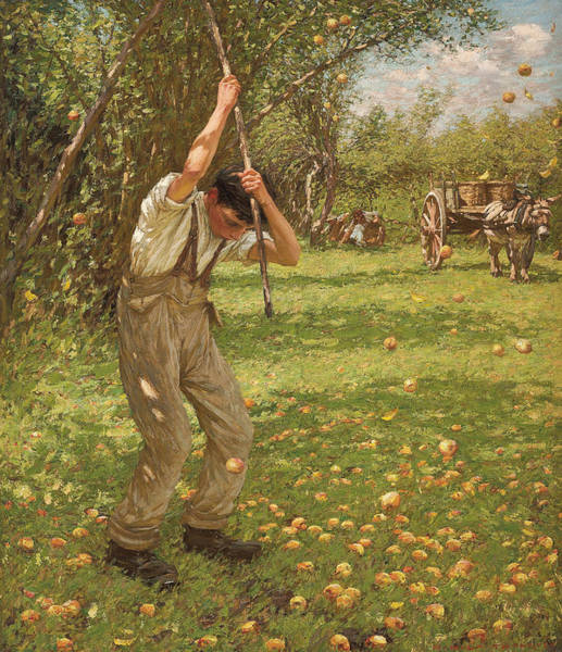 Apple Orchard Painting - Shaking Down Cider Apples  by Henry Herbert La Thangue