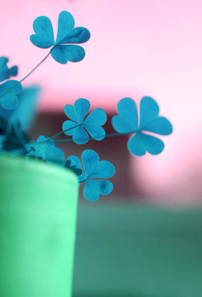 Photograph - Shamrock Pot V by Emanuel Tanjala