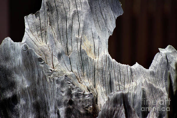 Photograph - Shaped By Time by Karen Adams