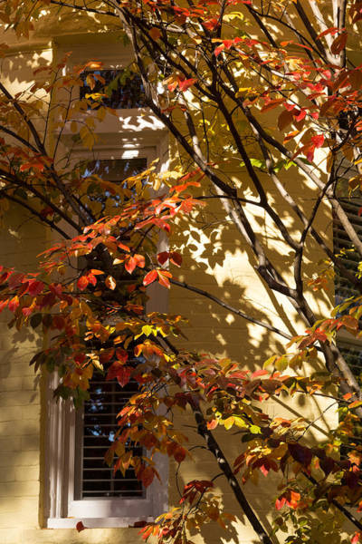 Photograph - Shapes And Patterns - Enjoying The Colorful Leafs Of Fall by Georgia Mizuleva