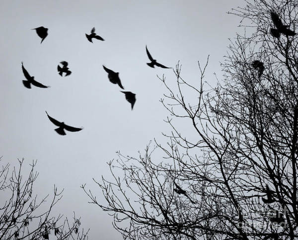 Crows Nest Wall Art - Photograph - Shapes Of Crows  by Philip Openshaw