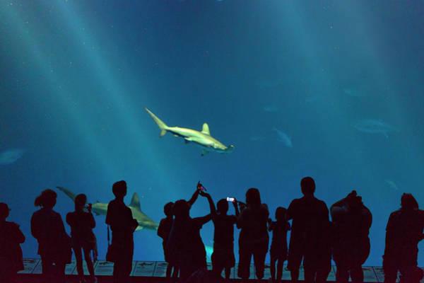 Monterey Bay Aquarium Photograph - Shark Alley by Brian Knott Photography