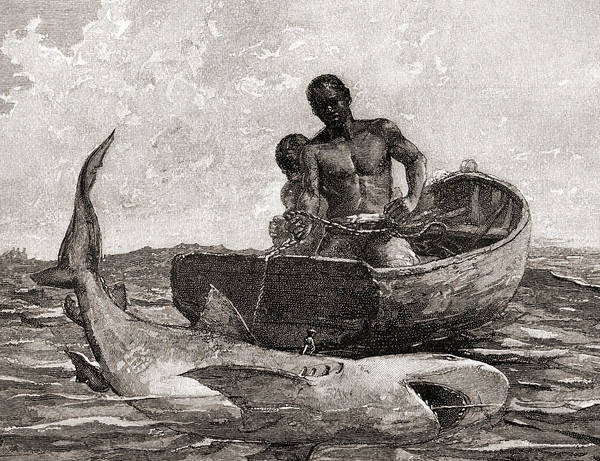 Shark Drawing - Shark Fishing, Nassau Bar by Winslow Homer