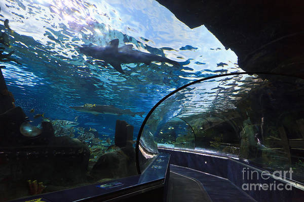 Photograph - Shark In An Aquarium by Jill Lang