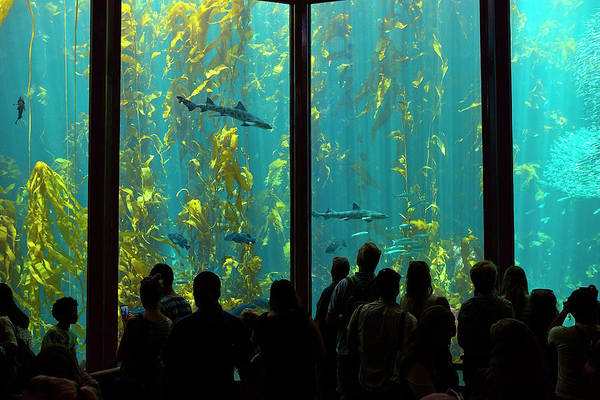 Monterey Bay Aquarium Photograph - Shark Infested Waters by Brian Knott Photography