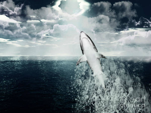 Photograph - Shark Watch by Digital Art Cafe