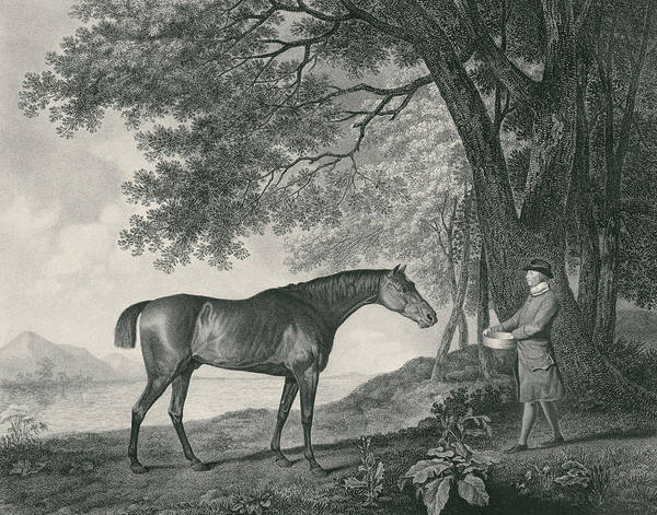 Equestrian Drawing - Sharke by George Stubbs