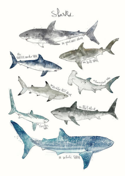 Wall Art - Painting - Sharks by Amy Hamilton