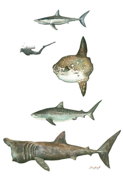 Scuba Diving Wall Art - Painting - Sharks And Mola Mola by Juan Bosco