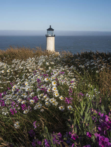 Photograph - Shasta Daisies At North Head Lighthouse. by Robert Potts