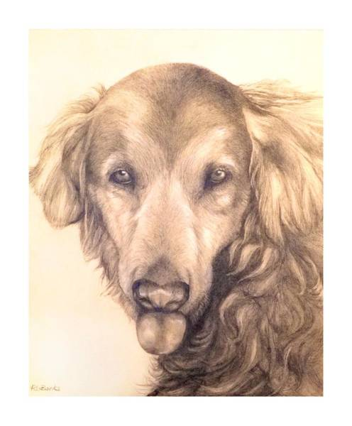 Service Dogs Drawings Fine Art America