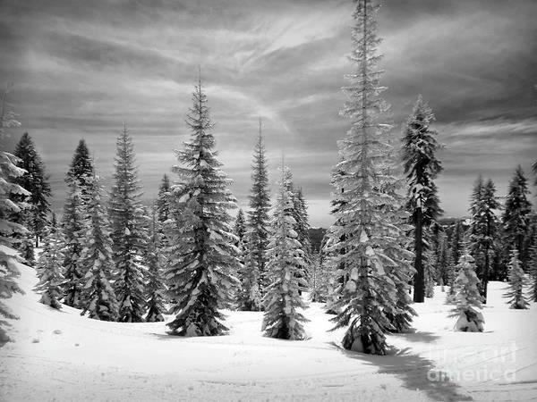 Photograph - Shasta Snowtrees by Martin Konopacki