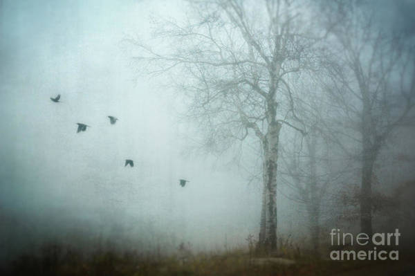 Wall Art - Photograph - She Flew Away by HD Connelly