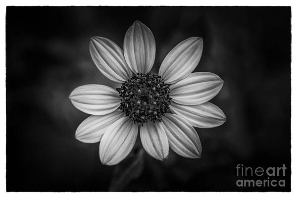 Hands Of Time Photograph - She Loves Me by Marvin Spates