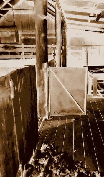 Photograph - Shearing Shed Australia by VIVA Anderson
