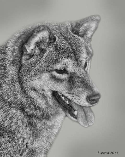 Digital Art - Sheba Inu  by Larry Linton