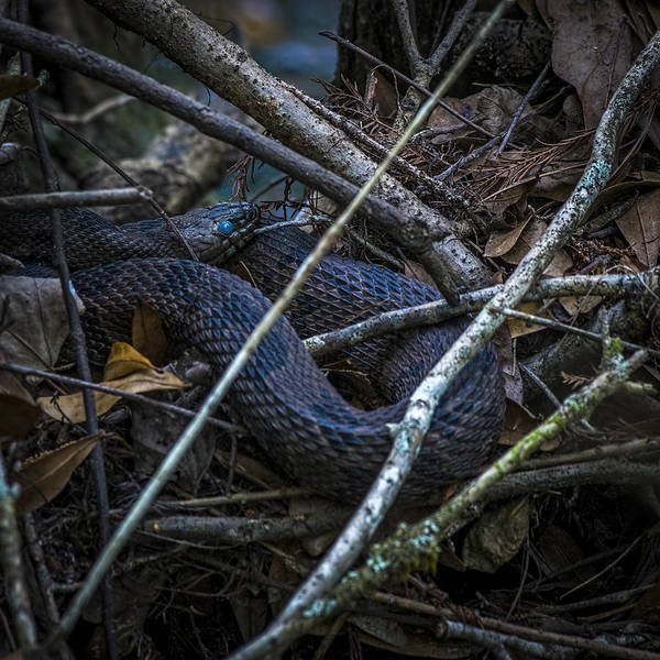 Grass Snake Photograph - Shedding Time by Marvin Spates
