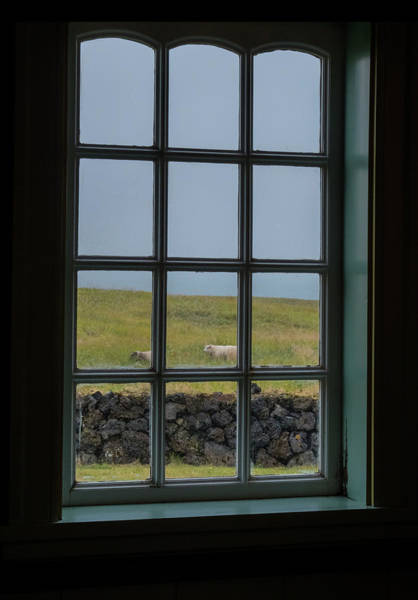 Photograph - Sheep And Window by Tom Singleton