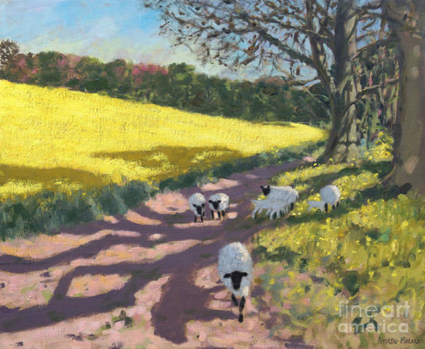 Wall Art - Painting - Sheep And Yellow Field by Andrew Macara