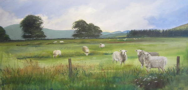 Sheep At Strathcarron Art Print