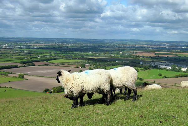 Photograph - Sheep At Westbury Tor by Kurt Van Wagner